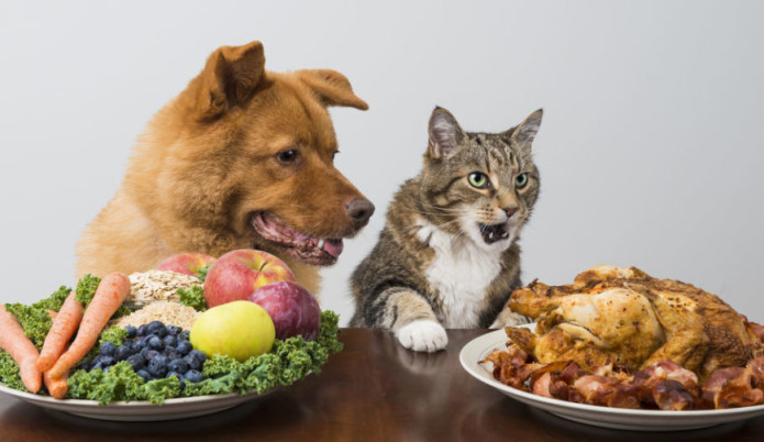 32612353 - dog and cat choosing meat versus veggies and fruits